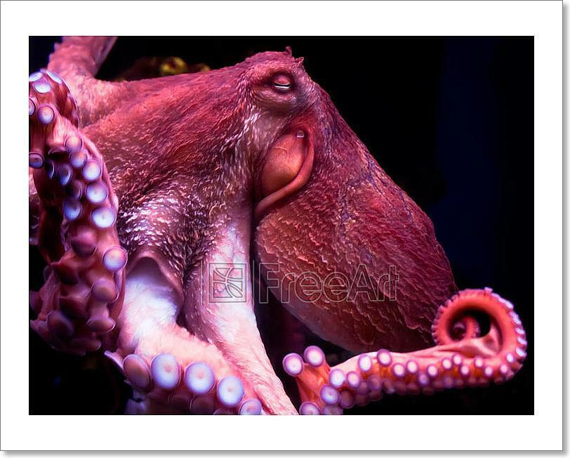 Octopus Art Print Home Decor Wall Art Poster - E