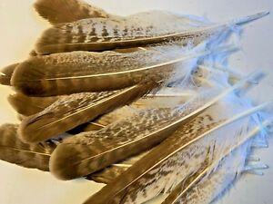 3pcs-RARE-Natural-Genuine-Exotic-Owl-Feathers-22-24cm-DIY-DIY-Craft-Smudge-Fan