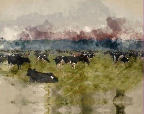 Jersey Bordüre Kuh Weide Panel 200 x 150 cm Stenzo /& Ottobre