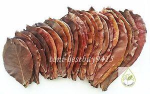 "Temperate 12 Pcs Big 9-10"" Ketapang Catappa Indian Almond Leaves For Shrimp Betta Discuss Superior Performance Pet Supplies Fish & Aquariums"