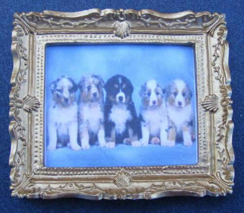 1:12 SCALA Foto Incorniciata di cinque cuccioli Casa delle Bambole Arte In Miniatura JD stampa