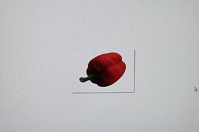 10 Samen Spanische Paprika,rot,capsicum Annuum,#289 ZuverläSsige Leistung