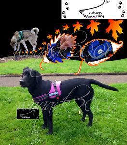 Purple-Dog-Harness-S-M-L-XL-padded-extra-Labrador-Hound-Spaniel-Pointer-Terrier