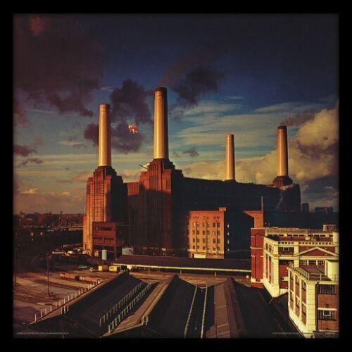 Animals Framed Album Cover Print ACPPR48128 Pink Floyd