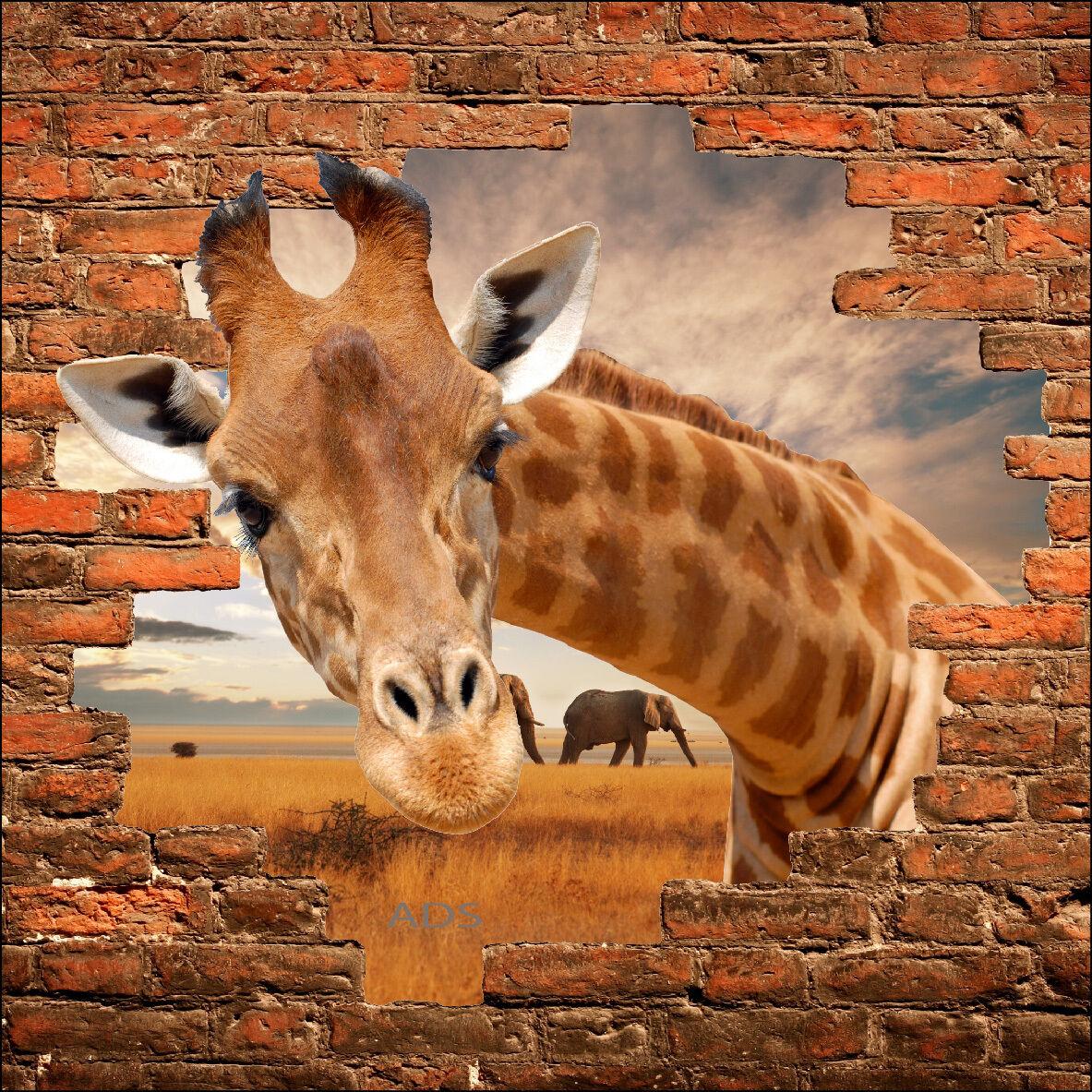 Wandsticker Schein Auge Giraffe Ref 866