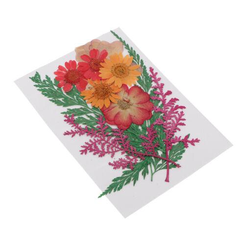 Trockenblumen Blumenblätter Trockene Blume Getrocknet Blüten für
