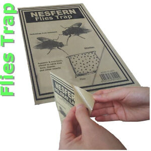 10-pcs-Disposable-orchid-Flies-Weevil-Insect-Bug-Trap-odor-attract-amp-sticky