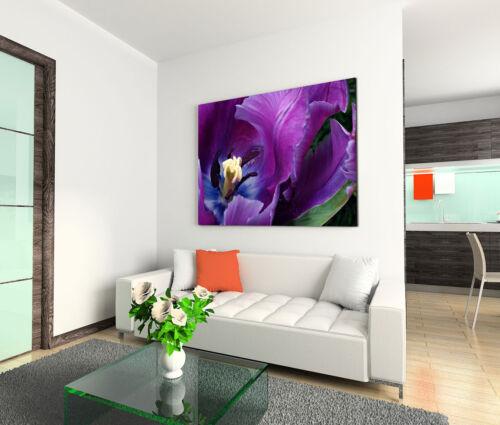 Leinwandbild 120x80cm auf Keilrahmen Blume,Pflanze,lila,purpur,Veilchen