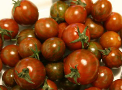 Mode Stijl Tomate Samen Schwarze Zebra Kirschtomate Tomatensamen