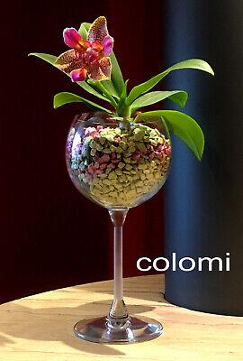 (4,99 € 1 L) Colomi Patentierter Orchideenboden, Weiss, 4x 1 Liter Beutel, Neu