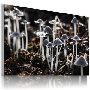 MUSHROOMS-VEGETABLES-KITCHEN-View-Canvas-Wall-Art-Picture-Large-SIZES-F30-X