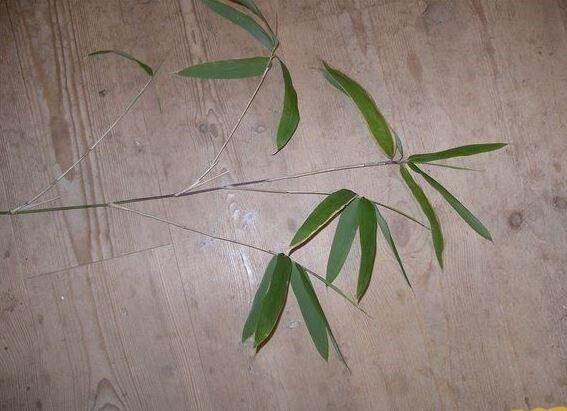 Japansk Bambus Meget Sjaelden Dba Dk Kob Og Salg Af Nyt Og Brugt