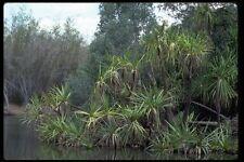069044 Yellow Waters Billabong With Pandanus A4 Photo Print