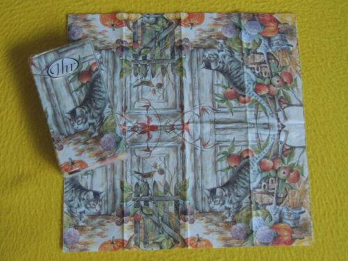 Handkerchiefs Cats 1 Pack Autumn Garden Bird Napkin your Berries Pumpkin