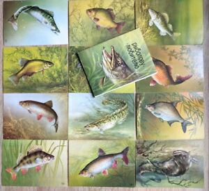 1987-Complete-set-12-Freshwater-fish-by-ISAKOV-Russian-postcard