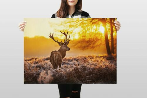 A1Winter Stag Poster Art Print 60 x 90cm 180gsm Deer Wildlife Forest #8110