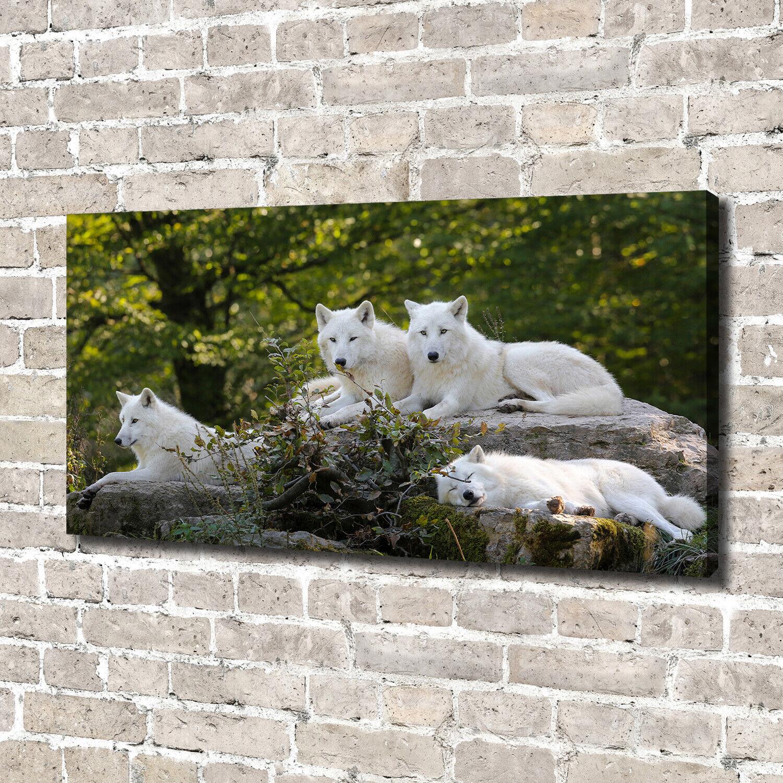 Leinwandbild Kunst-Druck 140x70 Bilder Tiere Weiße Wölfe Felsen