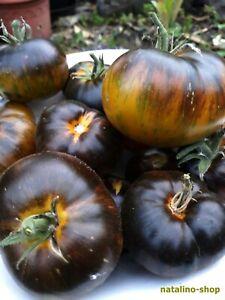 Tomate-Xanadu-Green-Goddess-10-Samen-Tomatensamen-Tomatoes-seeds