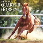 American Quarter Horses by Willow Creek Press.