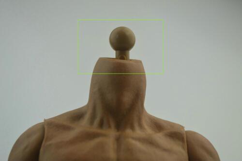 5pcs x 1//6 Neck Peg Joint Adapter 2.4cm Long for Hot Toys Body Custom Head Sculp