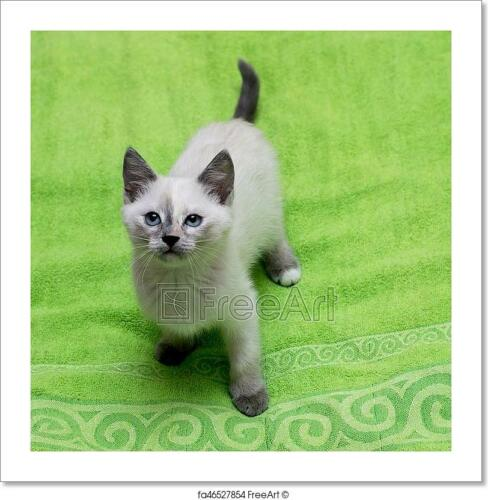 White Thai Kitten On A Green Towel Art Print Home Decor Wall Art Poster