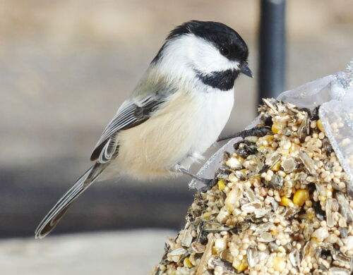 Wreath Bird Seed Feeder Reinforced One pound size with hanger Organic