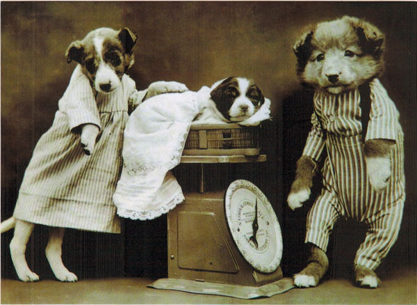 DOG PARENTS CHECK WEIGHT OF THEIR CHILD Modern Russian postcard