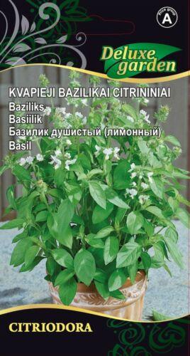 Grosse Promo Graines de Basilic citron