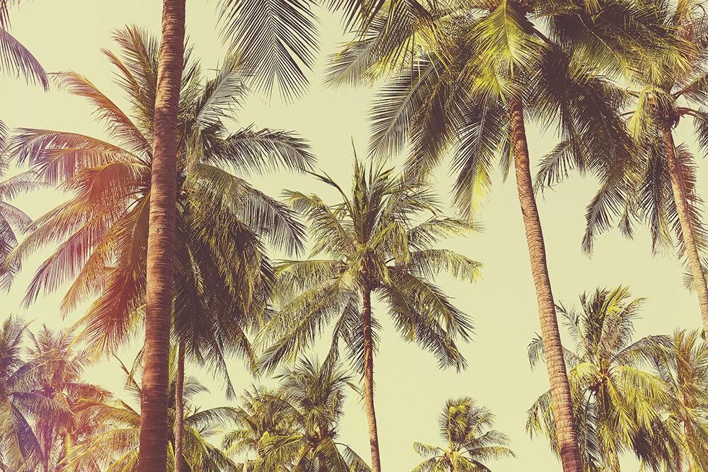 Fototapete Palmen Karibik Strand Urlaub Kleistertapete   Selbstklebende Tapete