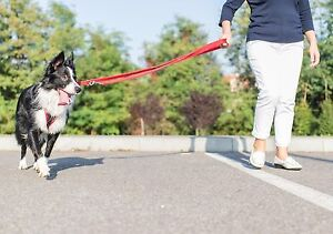 Strong-Web-Double-Ended-Police-Style-Adjustable-Dog-Training-Lead