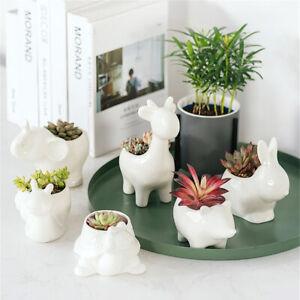 Image is loading Animals-Ceramic-Succulent-Plant-Flower-Pot-Planter-Office- & Animals Ceramic Succulent Plant Flower Pot Planter Office Home Desk ...