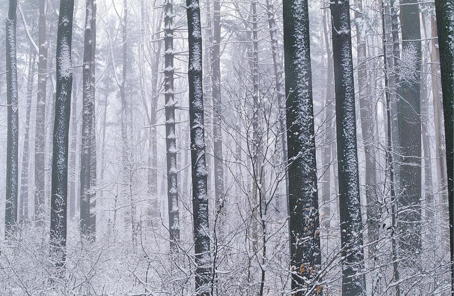 3D Weißer Schnee Dschungel 74 Tapete Wandgemälde Wandgemälde Wandgemälde Tapete Tapeten Bild Familie DE  | Clever und praktisch  | Neuheit Spielzeug  | Am wirtschaftlichsten  30f9ff