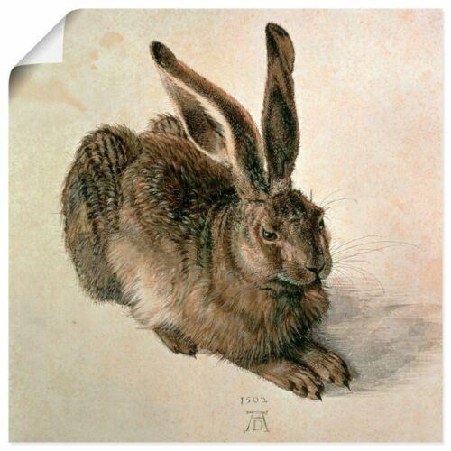 Artland Poster viele Größen Albrecht Dürer Tiere Hase Malerei Braun T7TW