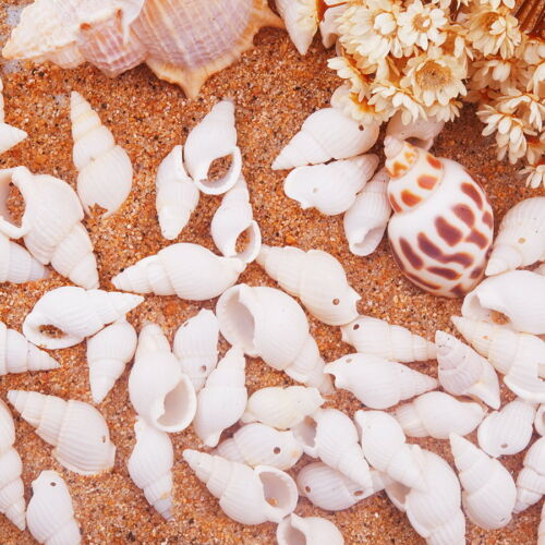 1 Boîte spirale Sea Shell teint perles et charms avec trous pour Craft Jewelry Making