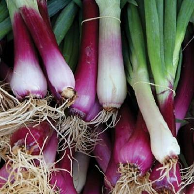 Spring Onion 'Apache' 50 seeds vegetable garden Shallot