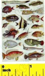 Image Is Loading Miniature Vintage Tropical Fish Poster Dollhouse 1 12