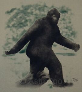 Details about BIGFOOT SASQUATCH--Myth Legend Folklore Squonk Creature Hoax  T Shirt M, XL only