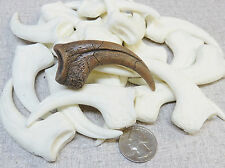 Hoeger Paleowerks Velociraptor Mongoliensis Raptor Killing Claw replica  NEW !!!