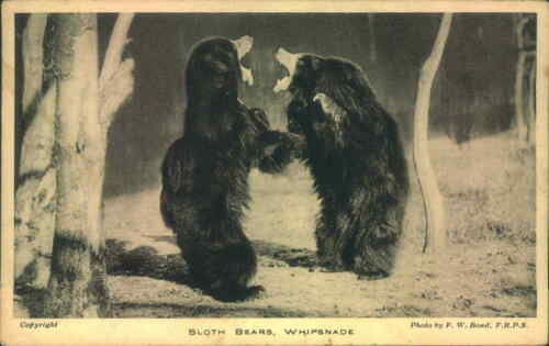 PICTURE POSTCARD ANIMAL CARD SLOTH BEARS WHIPSNADE ZOO
