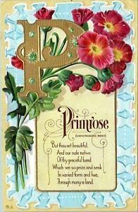 Letter-P-Primrose-Flowers-Name-Embossed-1910-Postcard-Motto-Series-No-6