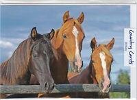 BIRTHDAY GREETING CARD - FRIENDS -  3 HORSE HEADS