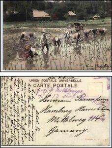 1910-20-Postcard-ASIEN-Arbeiter-Workers-im-Reisfeld-Bauern-bei-der-Arbeit
