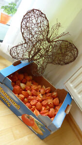 Rattan-Schmetterling und eine Schachtel Lampions (echte getrocknete) - Lonsee, Deutschland - Rattan-Schmetterling und eine Schachtel Lampions (echte getrocknete) - Lonsee, Deutschland