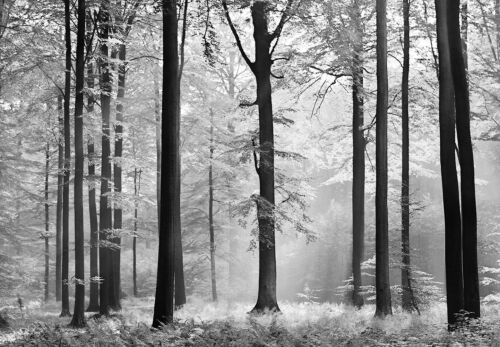 """Photo Papier Peint Noir Forêt Décoration Murale 366x254cm Art Grande Taille /"""" /"""""""