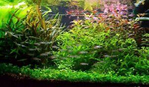 Lot pour aquarium de 40 plantes en 7 variétés à racines et tiges +15 gratuites