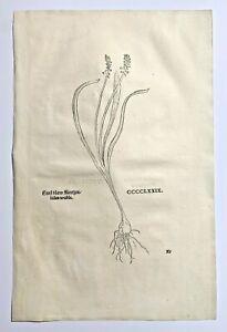 FUCHS 1543 Antique Woodcut Print - BLUE FLOWER Floral Botanical Herbal *RARE* 2