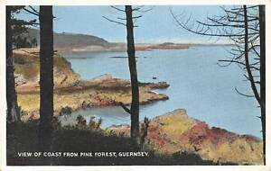 View-of-Coast-from-Pine-Forest-Guernsey