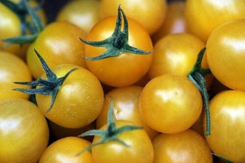 Golden Sweet Cherry Tomato