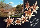 Cartolina - Postcard - Saluti da - Brosso - Stelle alpine - anni '50