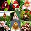 Mignon-Singe-Visage-100-Pcs-Graines-Orchidee-Bonsai-Plantes-Fleurs-Jardin-2020-Neuf miniature 1